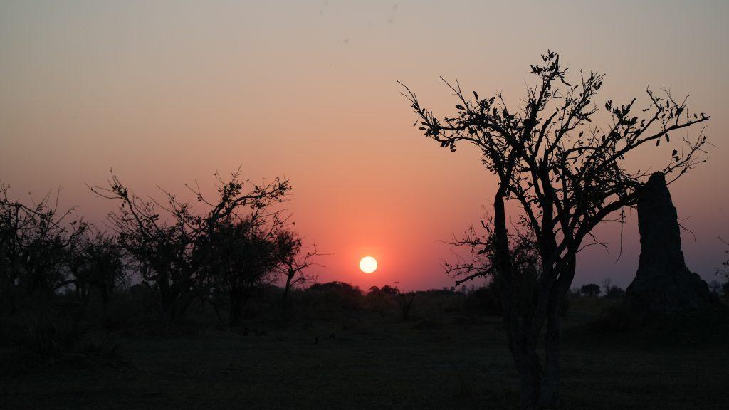 Sonnenuntergang bush walk
