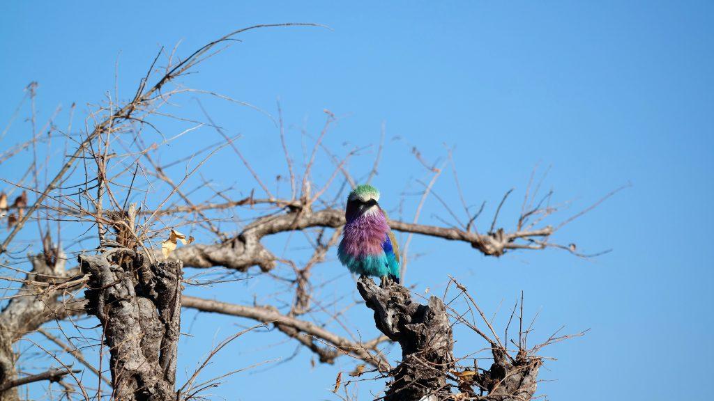Chobe Nationalpark